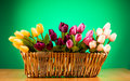 Bouquet Of Colorful Tulips Royalty Free Stock Photo - 15219675