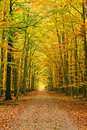 Pathway In The Autumn Forest Stock Photography - 15223532
