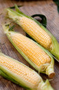 Fresh Corn Royalty Free Stock Photography - 15234797