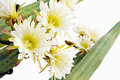 Close Up Of Cactus Flowers Stock Image - 15373081