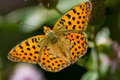 Butterfly Royalty Free Stock Photo - 15392445
