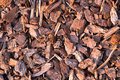 Pine Bark Mulch Royalty Free Stock Photo - 1541595