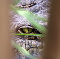 Crocodile Eye Stock Photo - 1546350