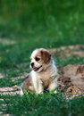 Cute Little Dog Stock Images - 15456994