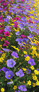 Multicolor Summer Flowers Royalty Free Stock Photos - 15462928