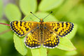 Butterfly Royalty Free Stock Photo - 15465635
