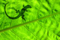 Lizard On Leaf Royalty Free Stock Photos - 15478768