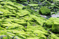 Moss Covered Rocks 2 Royalty Free Stock Image - 15490496