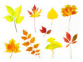 Different Autumn Leaves /  XXLarge Size Royalty Free Stock Image - 15518186