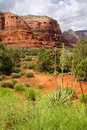 Two Soaptree Plants In Sedona Stock Images - 15537974
