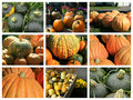 Collage Of Fall Squashes Royalty Free Stock Photos - 15598218