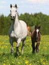 Mare And Foal Stock Photo - 15636460