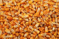 Corn Seeds Close Up As Background Royalty Free Stock Images - 15660019