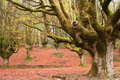 Beech Forest Stock Images - 15669304