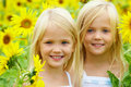 In Sunflowers Royalty Free Stock Photos - 15675588