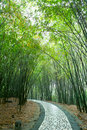Path In Bamboo Forest Royalty Free Stock Photography - 15687027