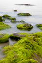 Boulders Covered With Green Seaweed In Misty Sea Stock Photos - 15700023
