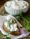 Cottage Cheese Stock Images - 15709594