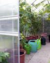 Greenhouse Close-up Stock Images - 15726314