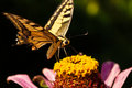 Butterfly Stock Images - 15752764