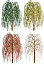 Weeping Willow Stock Images - 15771114