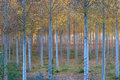 Autumn In The Woods Royalty Free Stock Images - 1581869