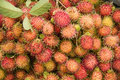 Litchi Chinensis Royalty Free Stock Photography - 15809637