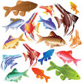 Collection Of Colour Aquarian Fishes. Stock Image - 15839661