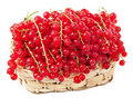 Red Currants In A Basket Royalty Free Stock Photography - 15843577