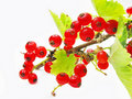 Red Currant Branch With Leaves Stock Images - 15874554