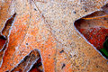 Frosty Leaves Stock Image - 1595141