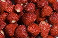 Wild Strawberries Royalty Free Stock Photography - 1596697