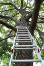 Ladder Going Up To A Tree Royalty Free Stock Photo - 15904065