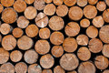 Pile Of Firewood Stock Image - 15947551