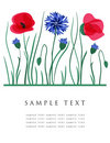 Cornflowers And Poppies. Vector Card. Royalty Free Stock Images - 15954379