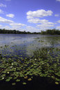 Lake With Lily Pads Royalty Free Stock Photos - 15995838