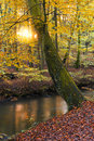 Autumn Forest Stock Photography - 1600282