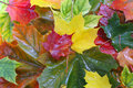 Leaves Royalty Free Stock Image - 16095606