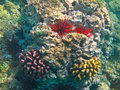 Coral Reef Royalty Free Stock Photos - 16098588