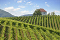 House In Vineyards Stock Photography - 16120802