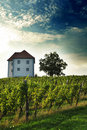 House In Vineyards Stock Photo - 16121430