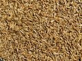 Caraway Seeds Background Royalty Free Stock Image - 16149016