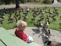 Surrounded By Geese Royalty Free Stock Image - 16198466