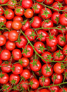 Healthy Tiny Tomatoes Background Stock Image - 16242371