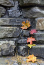 Fall Maple Leaves Stock Images - 16272964