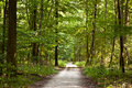 Path In Forest With Beautiful Trees Royalty Free Stock Photography - 16303227
