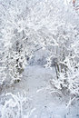 Snow Covered Branches Royalty Free Stock Image - 16315846