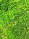Green Moss Royalty Free Stock Photos - 16339538