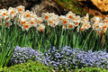 Narcissus Flowers  Stock Images - 16344044