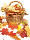 Leaves And Wicker Royalty Free Stock Photos - 16356458